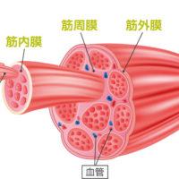腰痛の方は、筋肉の血行不良からの酸素不足が原因!?