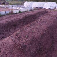 【家庭菜園】新たに種を植え付ける!