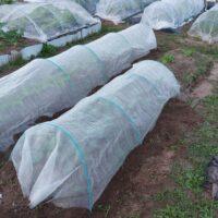 【家庭菜園】大根とブロッコリーに害虫予防のネットを張る!